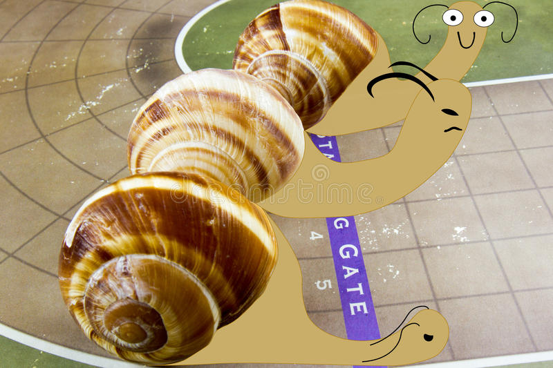 Starting gate on snail race. Illustrated snails on race track with real shells at starting gate stock illustration