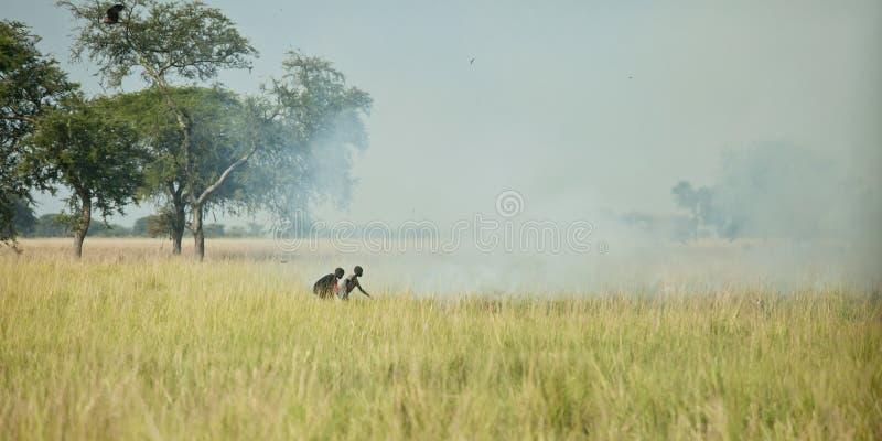 Starting grassfir in South Sudan stock photos