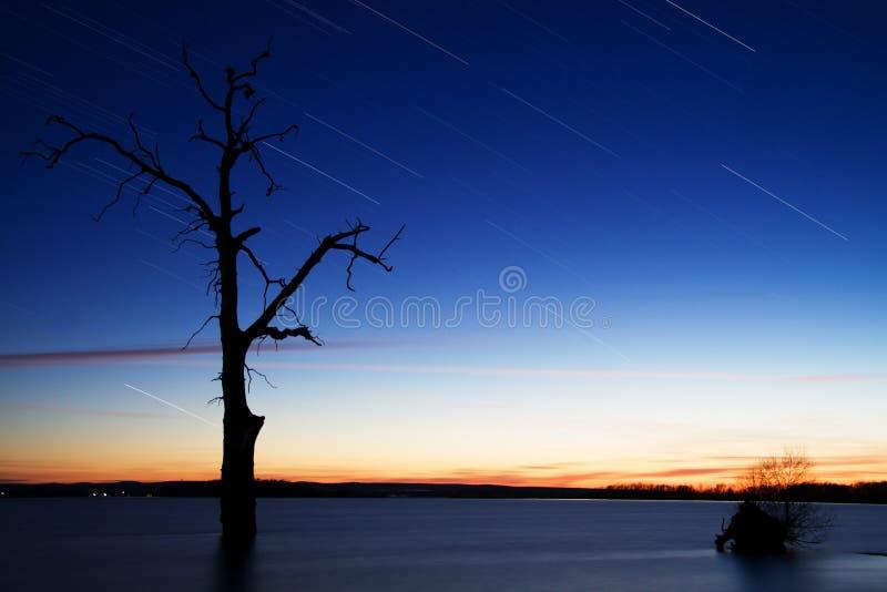 Startrails em torno da árvore velha no lago fotografia de stock royalty free