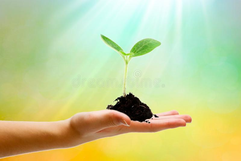 Startup concept, IPO project leader holds in his hand the idea of how to grow big business. Copy space. Startup concept, IPO project leader holds in his hand the royalty free stock images