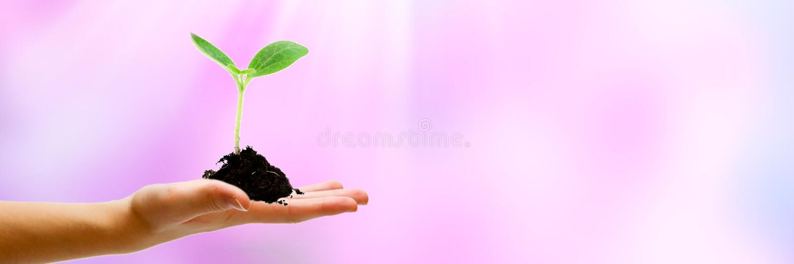 Startup concept, IPO project leader holds in his hand the idea of how to grow big business. Copy space. Panoramic view. Startup concept, IPO project leader holds royalty free stock photos