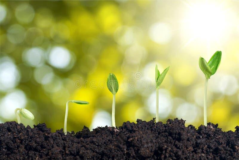 Startwert für Zufallsgeneratorwachstum lizenzfreies stockfoto
