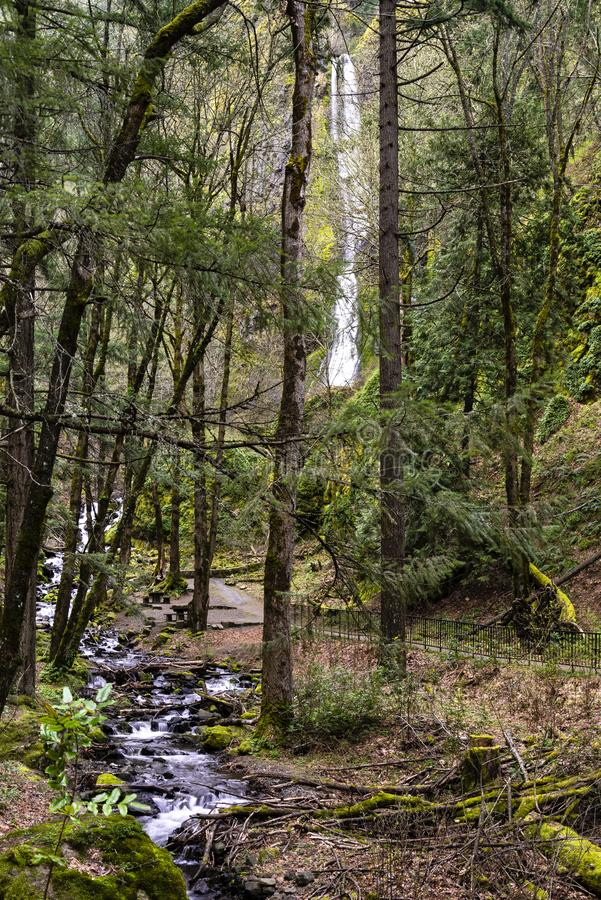 Starvation Creek and Falls from stock photography