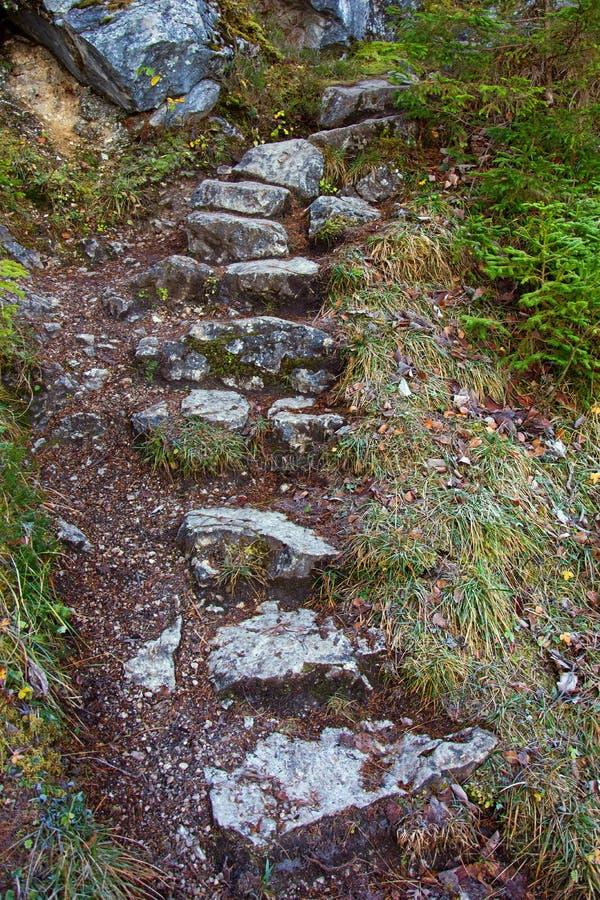 Starways de piedra naturales en bosque fotos de archivo