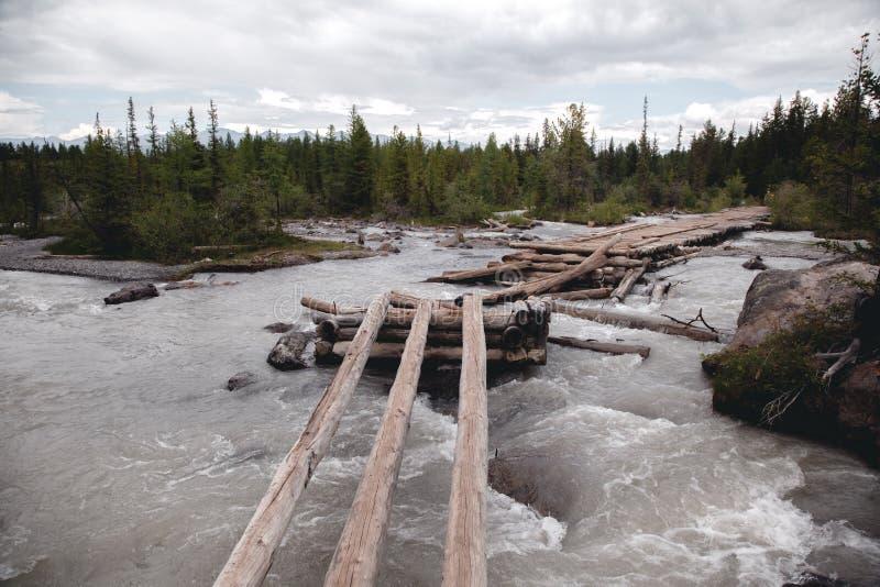 Stary, łamający, drewniany most nad rzeką w Altai górach, Ekstremum krzyżuje rzekę obraz stock
