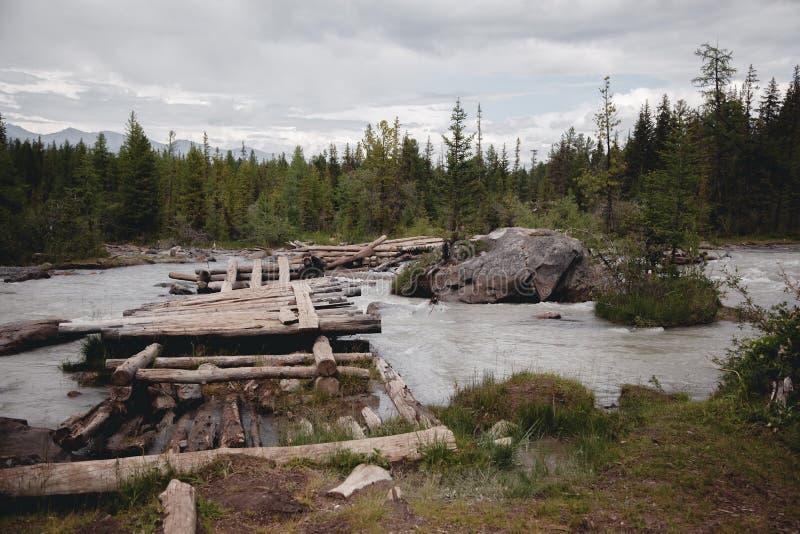 Stary, łamający, drewniany most nad rzeką w Altai górach, Ekstremum krzyżuje rzekę zdjęcie royalty free