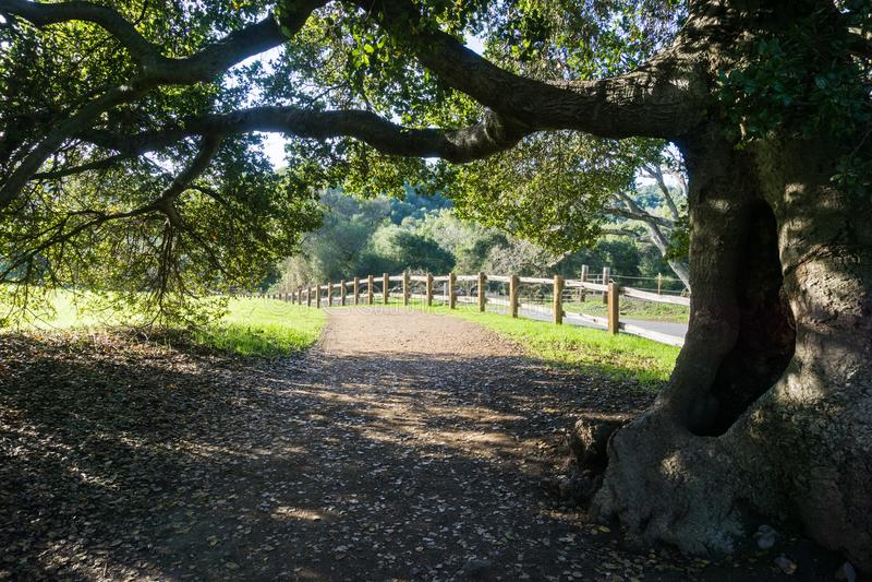 Stary żywy dębowy drzewo rozciąga swój gałąź nad chodzącym śladem zdjęcie royalty free