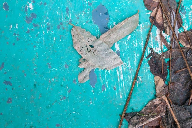 Stary błękitny tło z obieranie farbą, ulistnieniem i gałązkami, mokrym, zatartym, fotografia stock