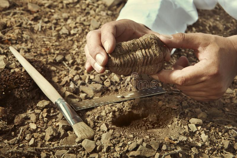 Stary badacz podnosi up trylobit skamielinę na skalistej lokaci zdjęcie royalty free