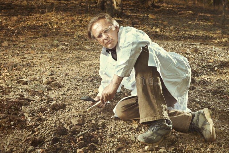 Stary badacz zakłada trylobit skamielinę na skalistej lokaci zdjęcie stock