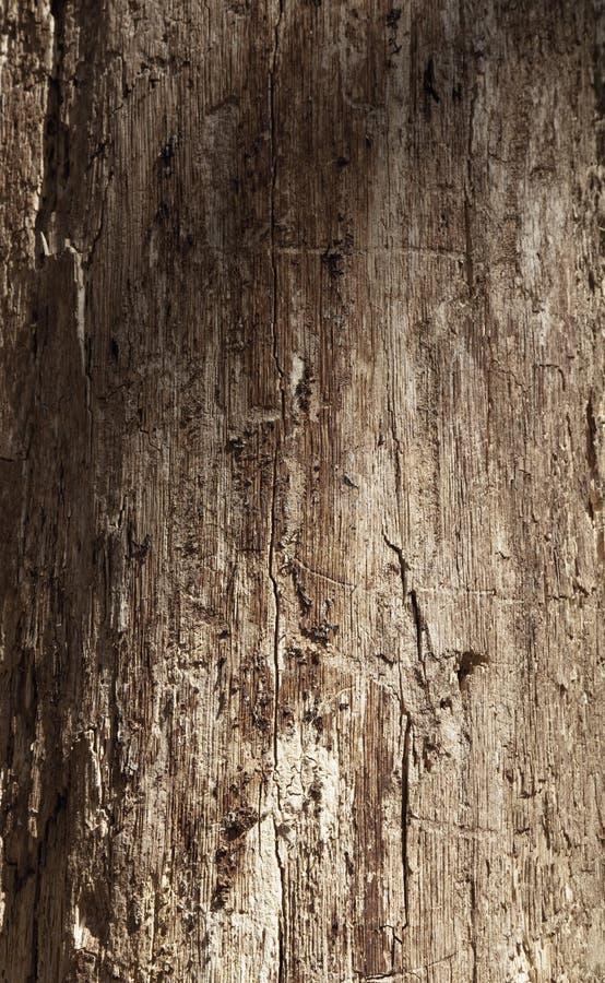 Stary bogaty drewniany tekstury tło z kępkami obraz royalty free