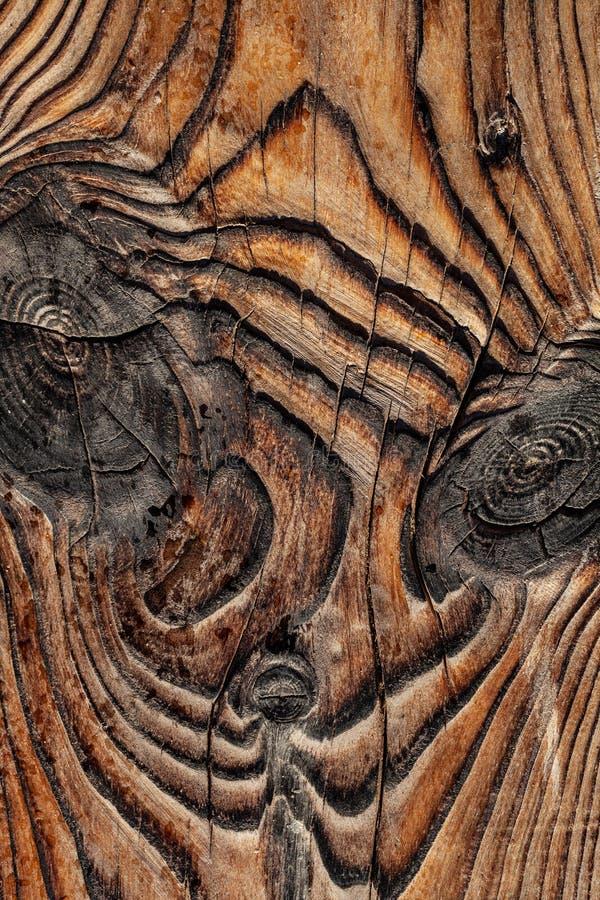 Stary bogaty drewniany tekstury tło z kępkami Drewno ściana dla desig fotografia royalty free