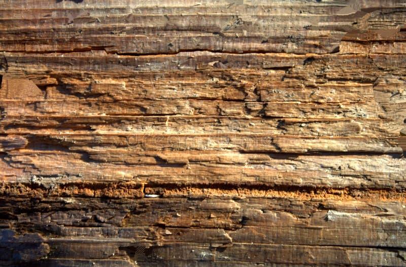 Stary brown nieociosany drewniany tło, drewniana powierzchnia z kopii przestrzenią Deska, tekstura zdjęcie royalty free