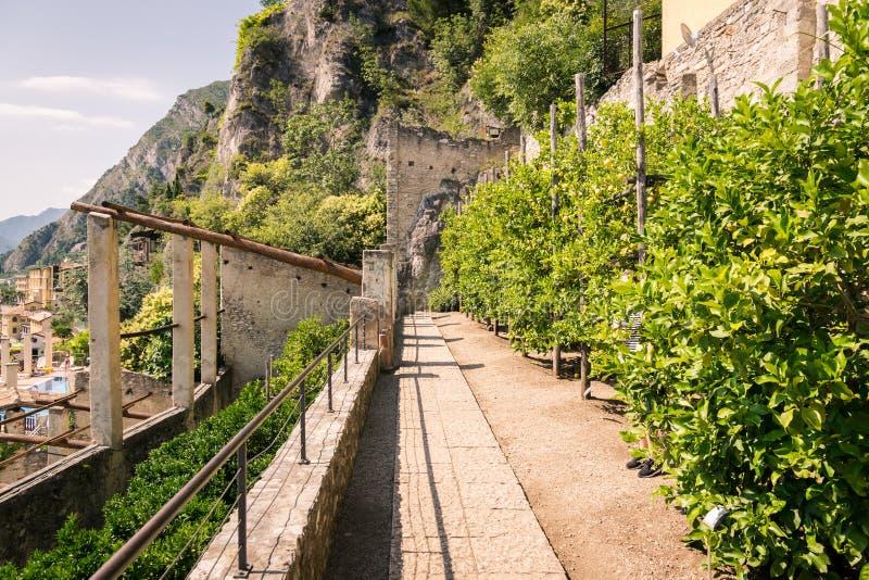 Stary cytryna dom w Limone sul Garda, Włochy zdjęcie stock