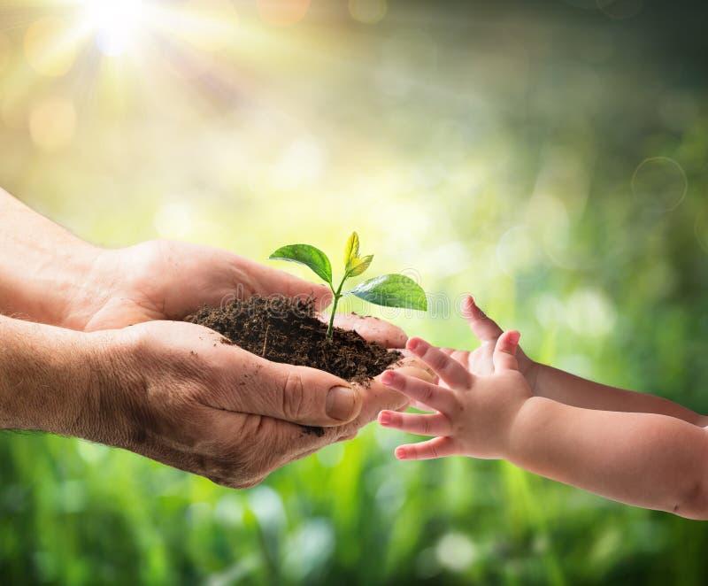 Stary Człowiek Daje Młodej rośliny dziecko - środowisko ochrona zdjęcie royalty free