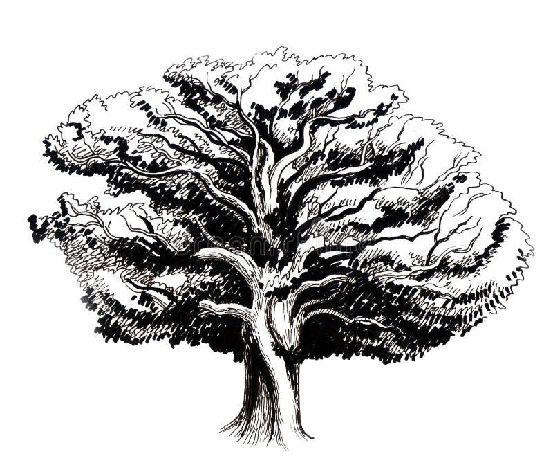 Stary Dębowy drzewo ilustracja wektor