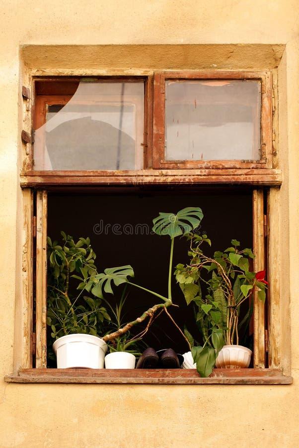 stary dom okno obraz royalty free
