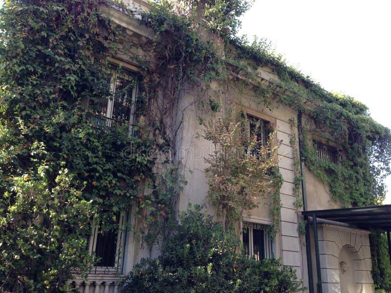 Stary dom w bluszczu obraz royalty free