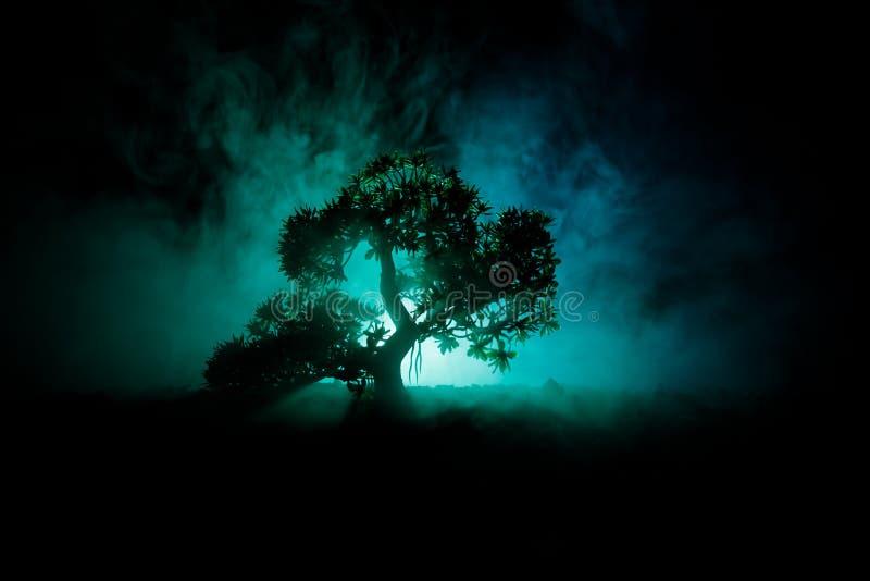 Stary dom z duchem w lesie przy nocą lub Porzucający Nawiedzający horroru dom w mgle Stary tajemniczy budynek w nieżywym drzewnym zdjęcie royalty free