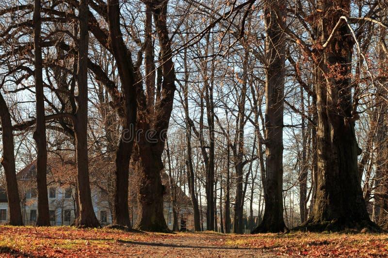 Stary dom za drzewami fotografia royalty free