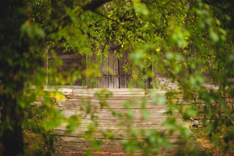 Stary drewniany drzwi przez zielonych liści obraz royalty free