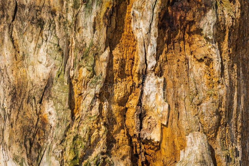 Stary drewno pękająca tekstura, zbliżenie grunge tekstury powierzchni drewniany tło obrazy stock