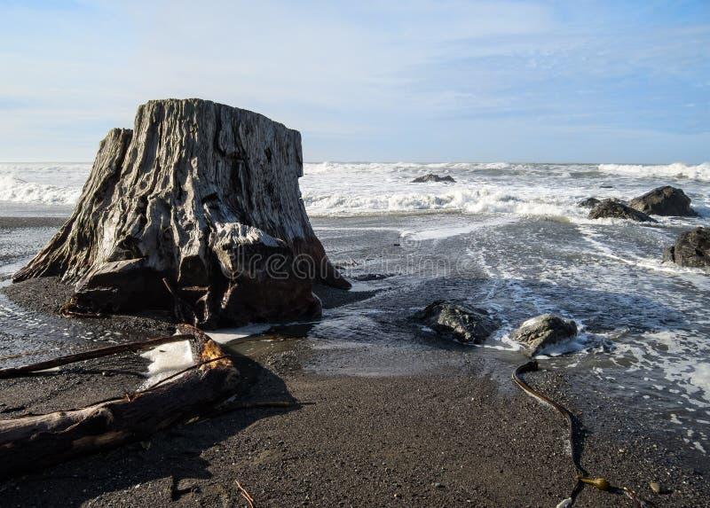 Stary drzewny bagażnik na plaży zdjęcie royalty free