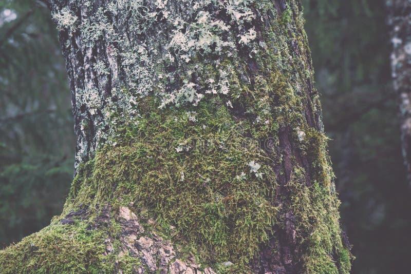 Stary drzewny bagażnik z zielonym mech i barkentyna - rocznik retro zdjęcie royalty free
