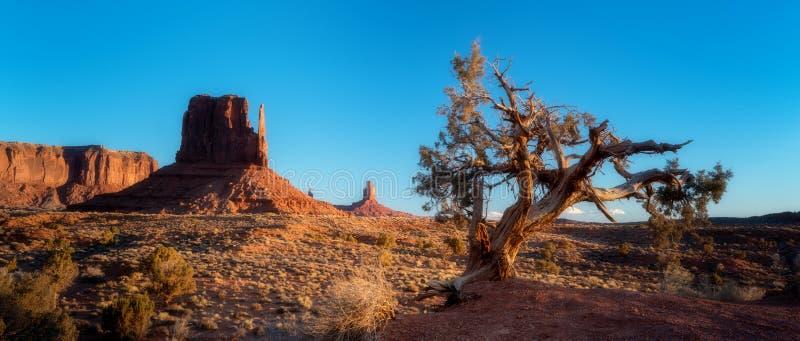 Stary drzewny wschód słońca w Pomnikowym Dolinnym Arizona z niebieskim niebem zdjęcia stock