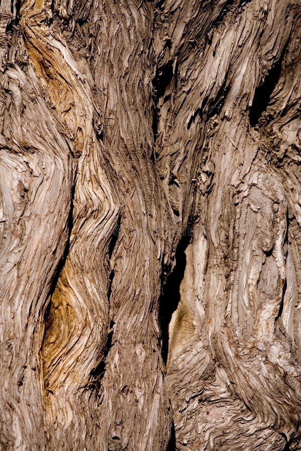 stary drzewo zdjęcie royalty free