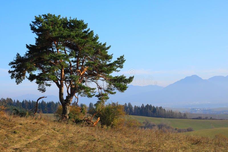 Stary drzewo zdjęcia stock