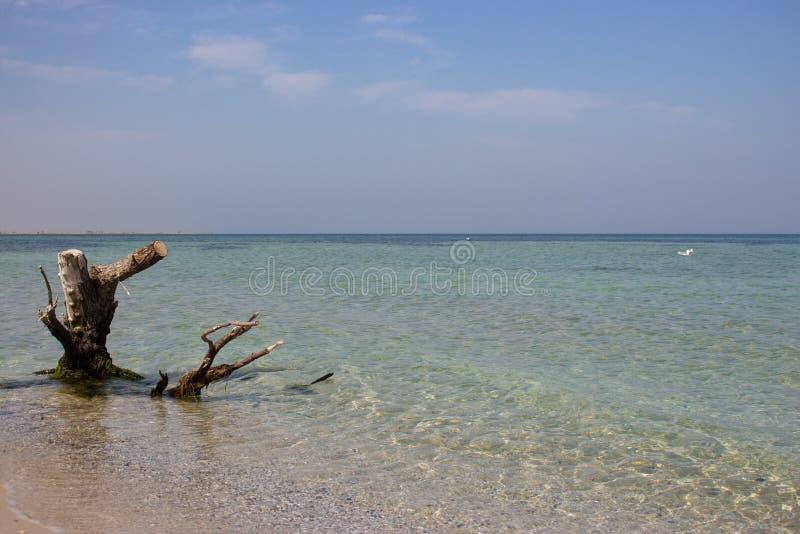 Stary drzewo i biały seagull w błękitnej wodzie morskiej w tropikalnym kurorcie błękitny skał denny seascape nieba lato Relaksuje zdjęcia royalty free