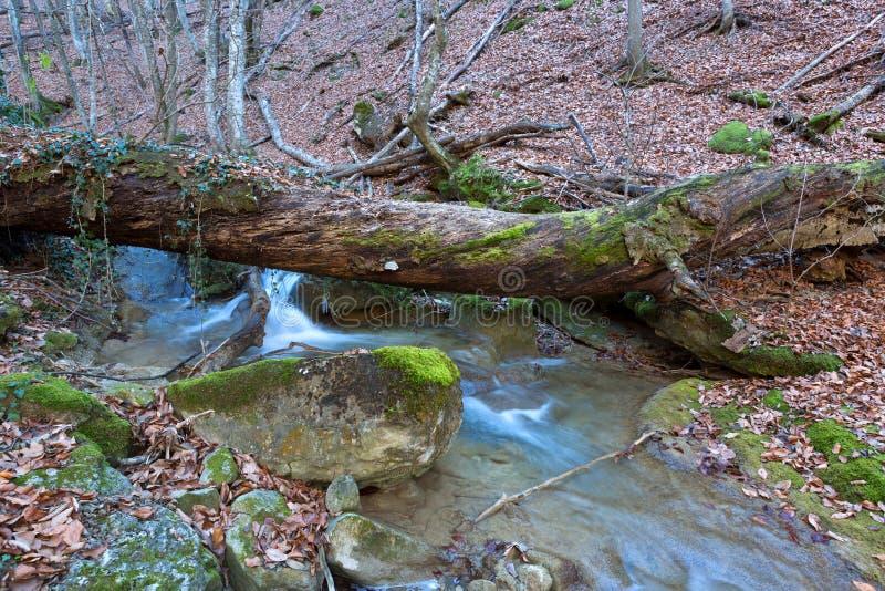 Stary drzewo nad halnym strumieniem zdjęcia royalty free
