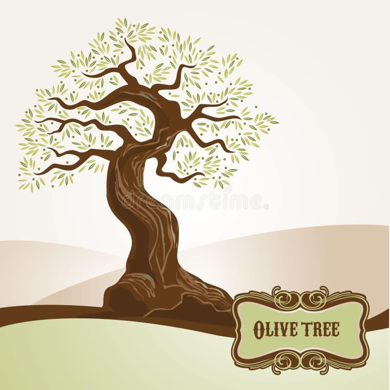 stary drzewo oliwne ilustracji