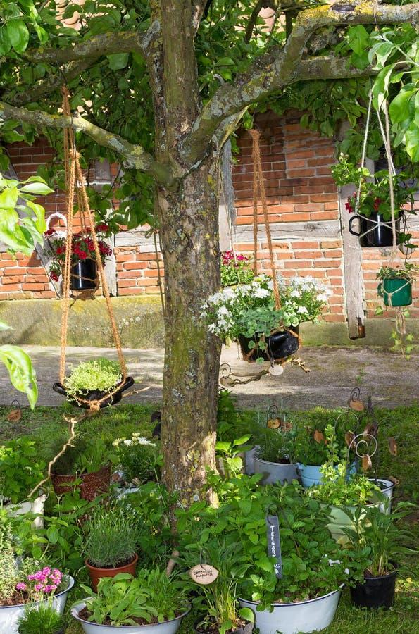 Stary drzewo w chałupa ogródzie z wiele wiszącymi koszami zdjęcia royalty free
