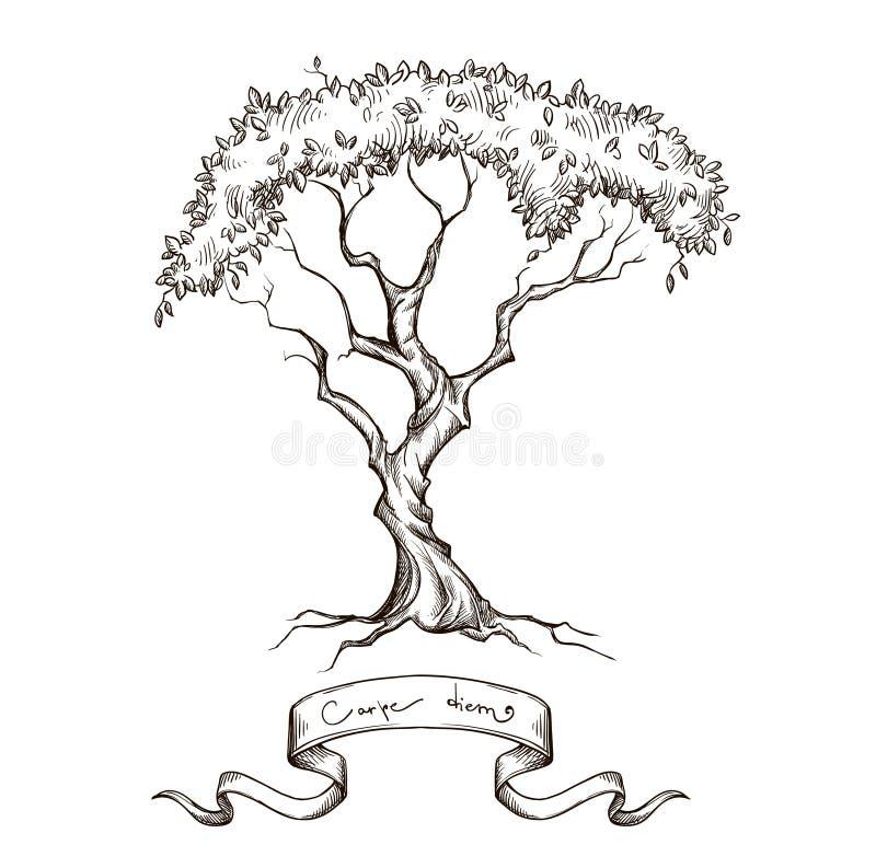 Stary drzewo z tasiemkową sztandar ręką rysującą ilustracja wektor