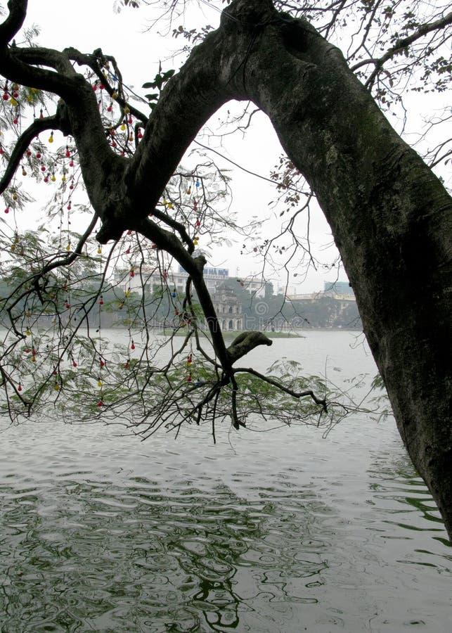 Stary drzewo Zaczyna jezioro w zieleni zdjęcia royalty free