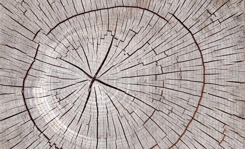 Stary drzewo znaczka tekstury tło zdjęcia stock