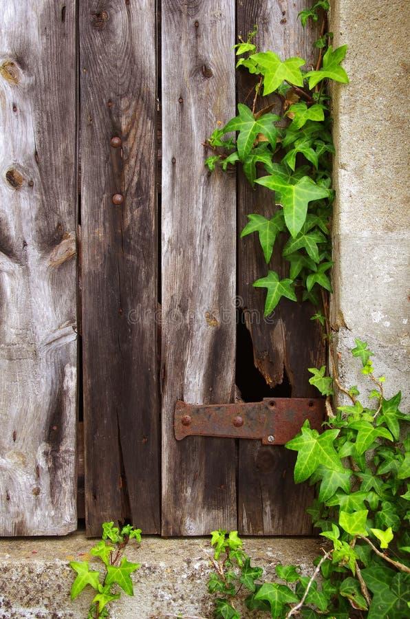 stary drzwiowy ulistnienie fotografia stock