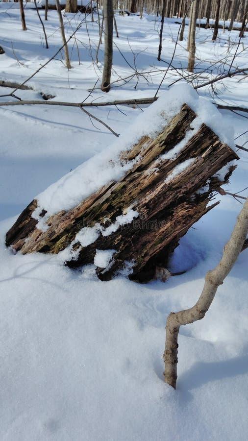 Stary fiszorek opuszczał od spadać drzewa zdjęcia royalty free