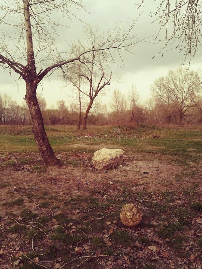 Stary forgoten futbolową piłkę w drewnach zdjęcie royalty free