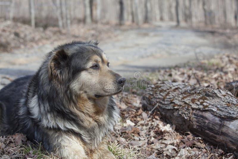 Stary gospodarstwo rolne pies zdjęcia stock