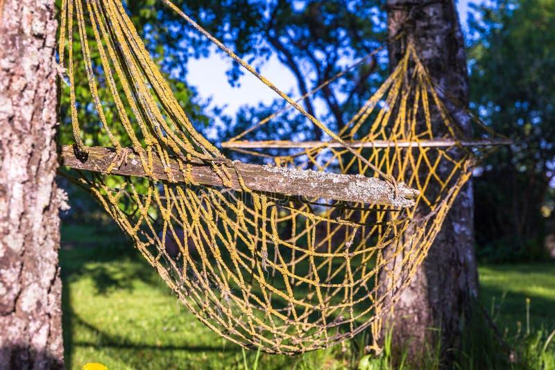 Stary hamak między brzoz drzewami zdjęcia stock