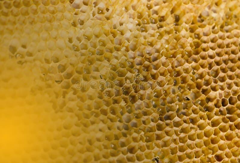 Stary honeycomb z miodowymi szczątkami po use w rojach fotografia royalty free
