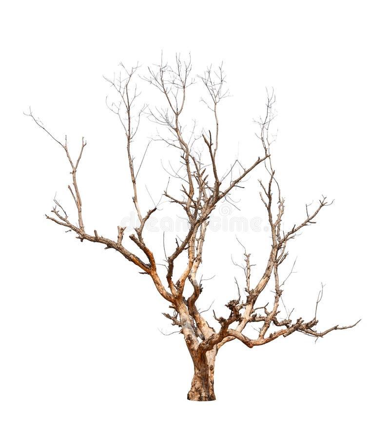 Stary i nieżywy drzewo fotografia royalty free