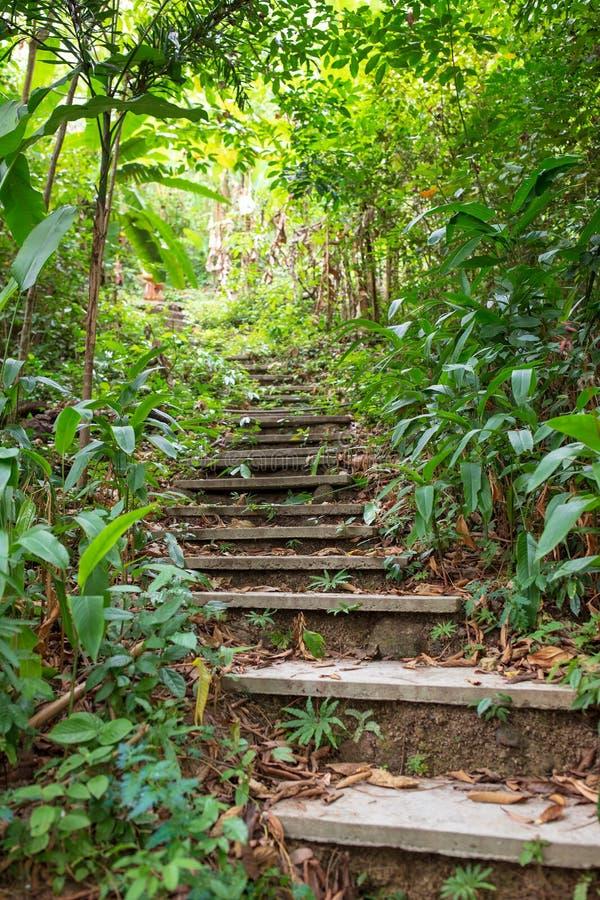 Stary kamienny schodek w zielonym tropikalnym lesie jako część wycieczkować ślad Dżungla fotografia royalty free
