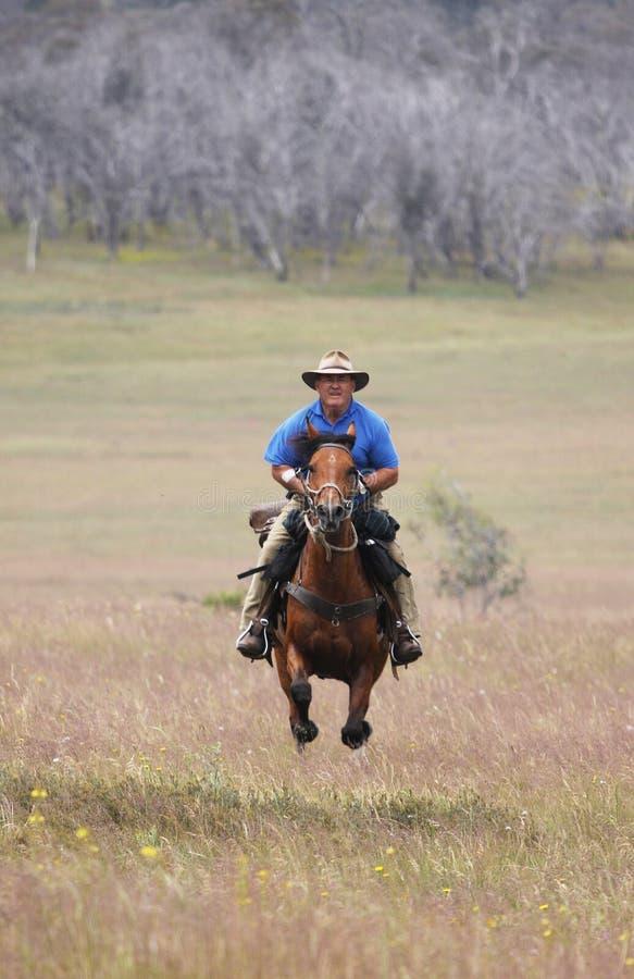 stary koń prędkość jazdy zdjęcia stock