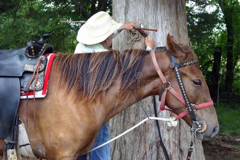 stary kowboj koń. zdjęcie royalty free