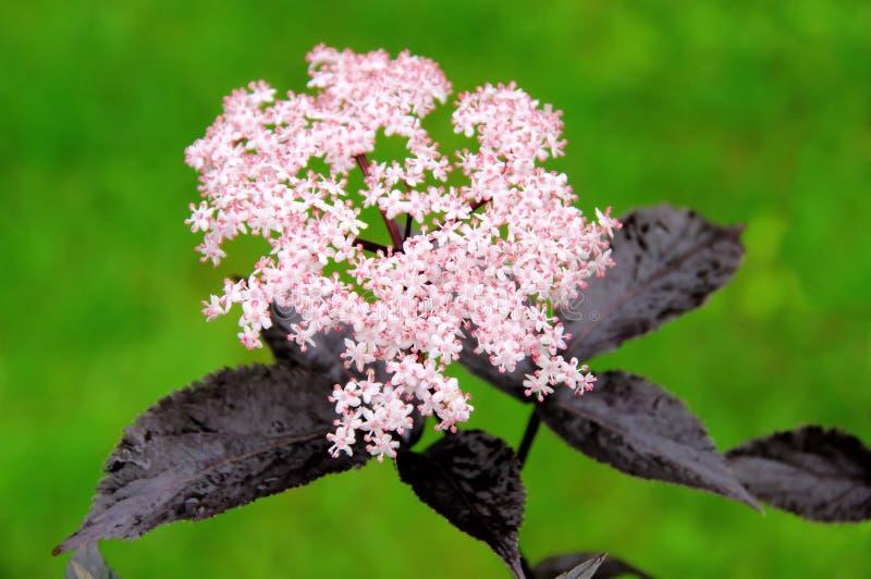 Stary kwiat obrazy royalty free