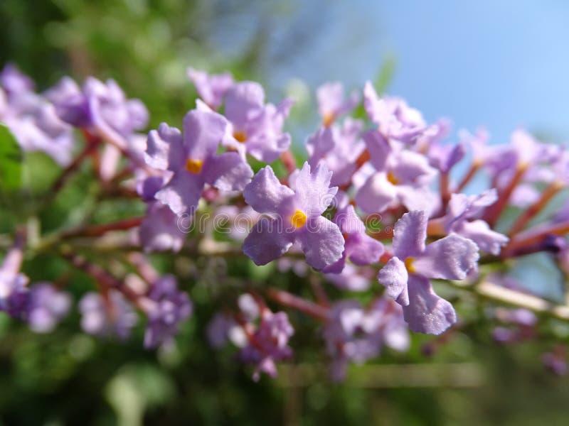 Stary kwiat Dziki obraz stock